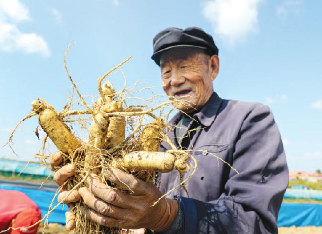 Сюй Маоцзяню 75 лет, всю жизнь выращивал женьшень в уезде Фусун, провинция Цзилинь.